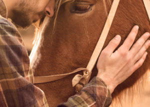 The Experience - Equine Therapy